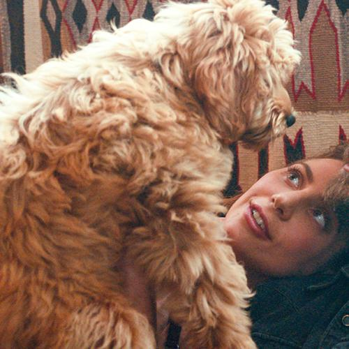 Bradley Cooper Cast His Own Dog In 'A Star Is Born'