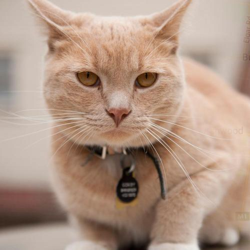 Another Melbourne Area Will Enforce A Cat Curfew Very Soon