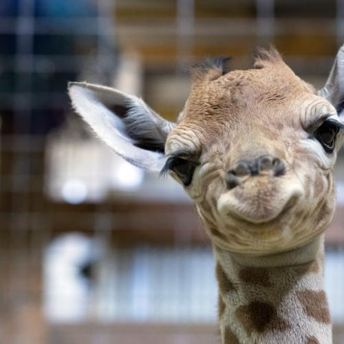 One Of Victoria's Largest Zoos (And Its Animals) Is For Sale