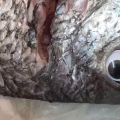 Fishmonger Puts Googly Eyes On Fish To Make Them Look Fresh