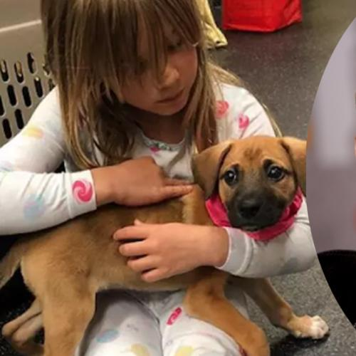 P!nk's Newly-Adopted Rescue Puppy Has The Cutest Name Ever!