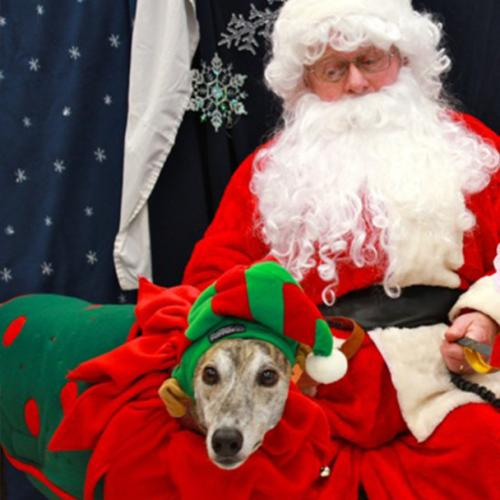 Here's Where You Can Get Christmas Pet Photos In Melbourne