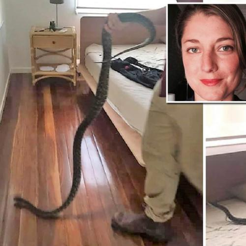 Aussie Woman Woken By 2-Metre Python Licking Her Face