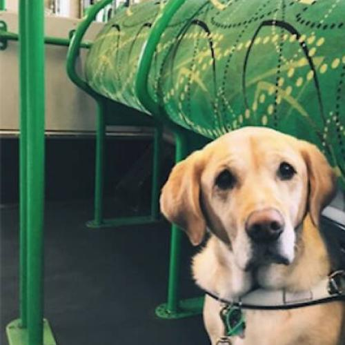 There's Going To Be A Melbourne Tram Full Of Dogs Next Week
