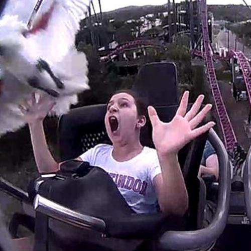 Girl Hit By Ibis On Rollercoaster At Movie World