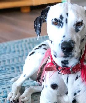 """Colin Fassnidge's Dogs """"Left To Die"""" After Vicious Attack Outside Chef's Home"""