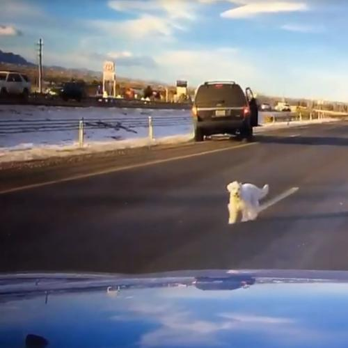 Scary Moment Puppy Leaps From Car On Highway, Survives!