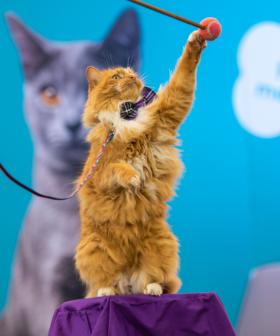 There's A Cat Lovers Show Coming To Melbourne
