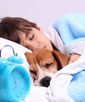 A Study Has Found Sleeping Next To A Dog Improves Your Sleep