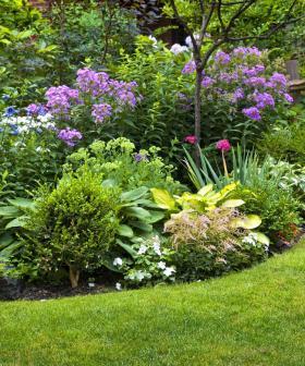 Win A Seasol Spring Garden Starter Pack
