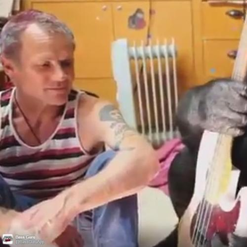 Red Hot Chili Peppers Flea Teaches Gorilla How To Play Bass