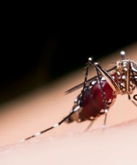 Another Virus Has Made Its Way To Victoria & It's Travelling Through Mosquitos