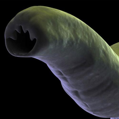 Beauty Of Biology: Worms May 'Cure' Asthma