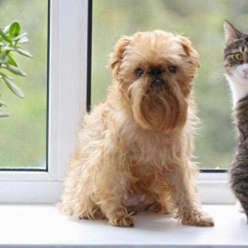 """The """"Nightmare"""" Issue That Pet Owners In Victoria Are Facing"""