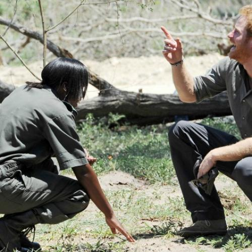 Prince Harry Just Caught A Crocodile & Yes We're Serious