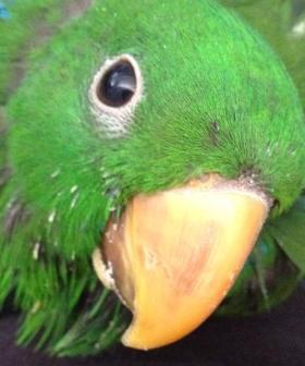 Aussie Elvis Impersonator Arrested For Stealing Parrot