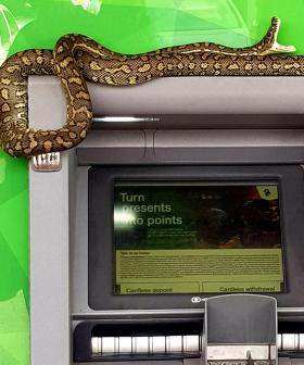 The Aussie ATM That Has Left Every Scared And Unable To Get Cash For A Very Snake-Like Reason