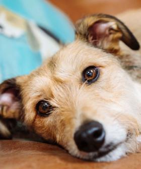 Pet Owners Beware! Two Melbourne Dogs Die From Deadly Rat Disease