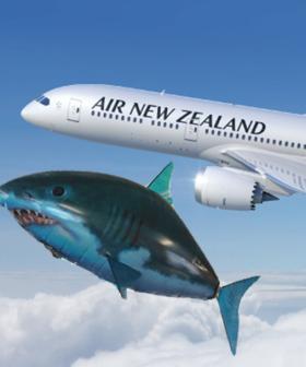 New Zealand Pilot Left Stunned By Flying Shark