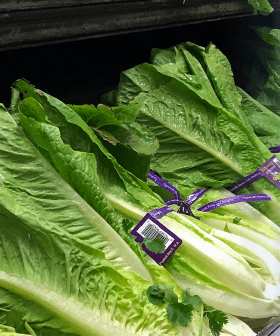 Fifty-Eight People Hospitalised, Over A Hundred Infected After Eating Dodgy Lettuces