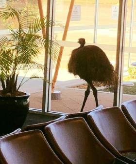 Only In Australia: An Emu Broke Into An Airport And The Pics Need To Be Seen