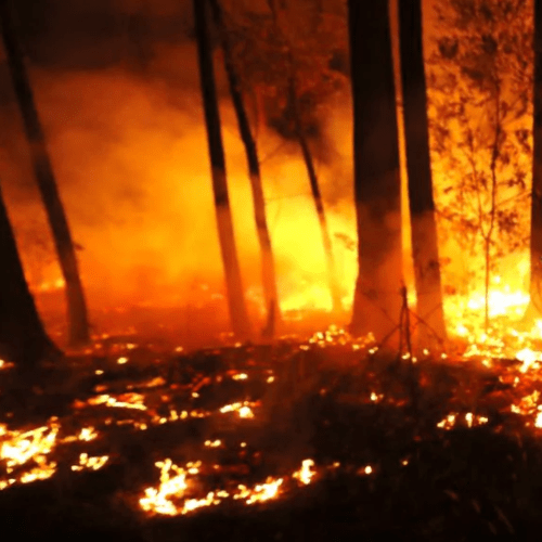 Jasper From That Insane Firefighting Escape Video