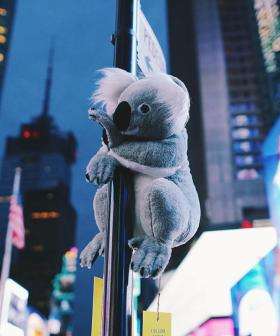 Adorable Stuffed Koalas Are Popping Up All Over New York City To Raise Awareness