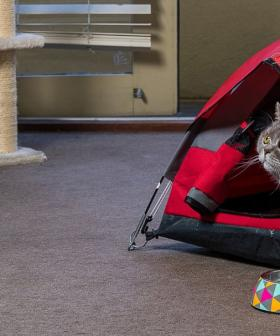 You Can Now Buy Camping Tents For Your Cat So They Can Be Even More Spoilt