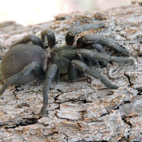 There Is Now A Deadly Funnel-Web Spider Outbreak, So Time To Stay Inside