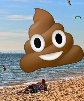Swimming In Melbourne Beaches Could Make You Really Sick Thanks To Dog Poo