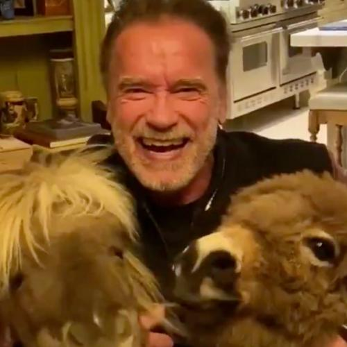 The Internet Is Loving This Video Of Arnold Schwarzenegger Self-Isolating With His Pet Donkey & Pony