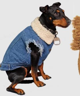 The Iconic Has Released A Pet Fashion Range And Honestly We Need EVERYTHING For Our Doggo