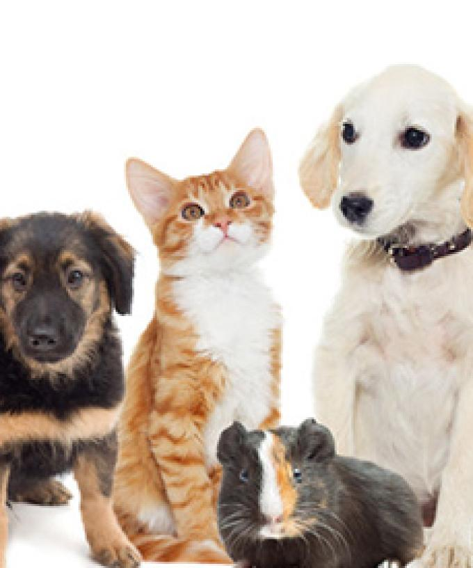 Our Animal Operations Are At Critical Point Rspca Urges People To Adopt A Pet