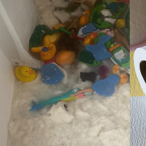 Mum Loses Her Entire Collection of Toilet Paper After Her Kids Destroy It In Bathtub