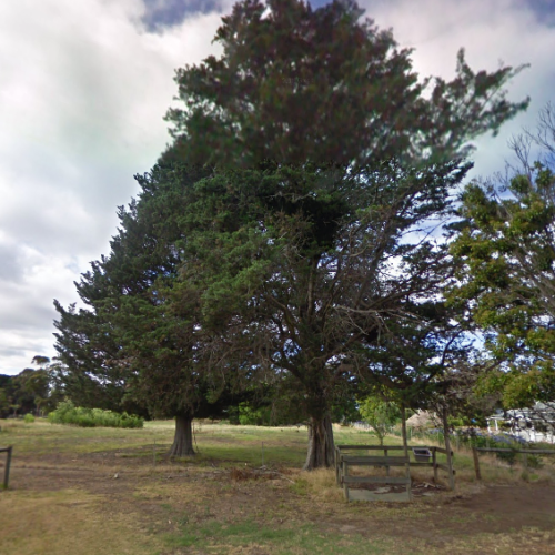 Woman Found Stuck Up A 15-Metre High Tree In Melbourne's South-East