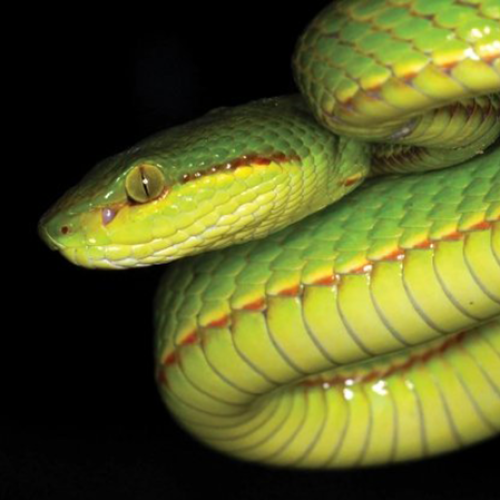 Scientists Who Discover New Species of Snake Decide To Name It After Harry Potter Character