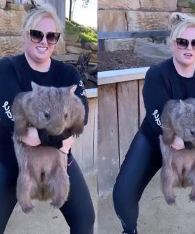 Rebel Wilson Squats With A Wombat Angering Animal Activists