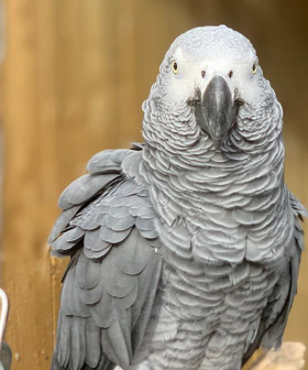 The Hilarious Reason A Zoo Had To Remove All Of Its Parrots