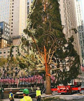 Rockefeller Center's Famous Christmas Tree Dragged As 'On Brand For 2020'