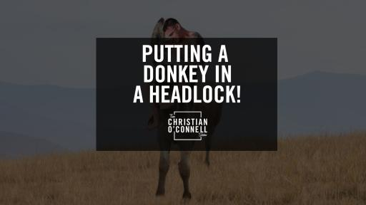 Putting A Donkey In A Headlock!