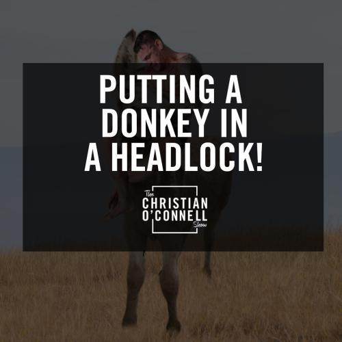 Putting A Donkey In A Headlock!