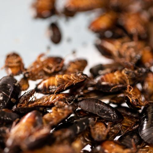 Aussie Mum Reveals Where Cockroaches Might Be Hiding In Your Kitchen After Son Makes Disgusting Find