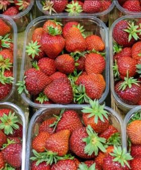 Aussie Farmers Are Now Offering $100,000 Per Person To Pick Strawberries!