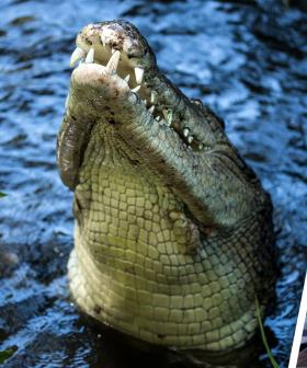 Why You Should Keep An Extra Close Eye On Your Kids... Especially When There Are Crocodiles Around
