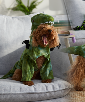 BIG W Has Released A New Range of Halloween Costumes For Your Pets